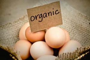 organic-eggs-9_14
