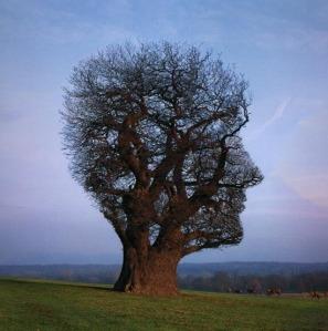 Tree of Half Life