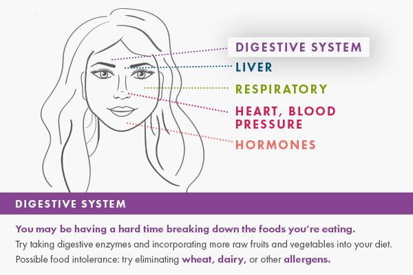600x400_digestivesystem